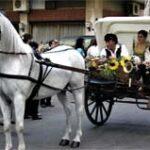 Carrozza trainata da un bianco cavalloche accompagna due giovani ragazzi alla festa